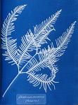 10310403