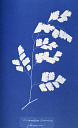10310414