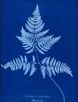 10310436