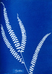 10310449