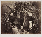 10454099