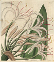 10567887