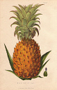 10567904