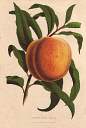 10567908