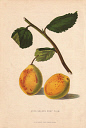 10567913