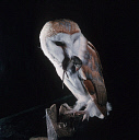 10575859