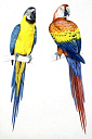 10578272