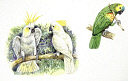 10578273