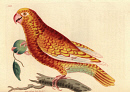 10621459