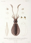 10425416