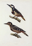 10423443
