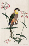 10423554