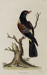10423591