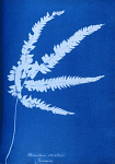 10310416