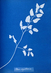 10310418
