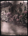 10406119