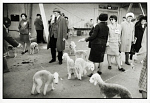10307834
