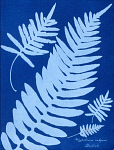 10310447