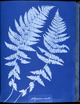 10310456