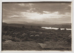 10454156