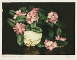 10453662