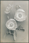 10459481