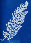 10310393