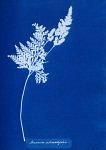 10310398