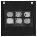 10660704