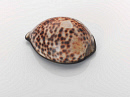 10681892