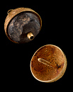 10687412