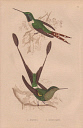 10567897
