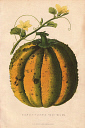 10567900
