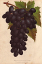 10567901