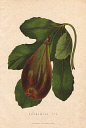 10567902
