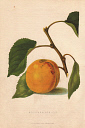 10567907