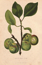 10567909