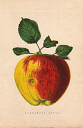 10567910