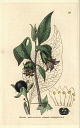10567915