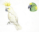 10578270