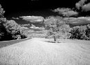 10629545