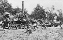 10650216