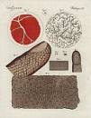 10653909