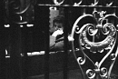 10662137