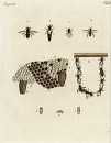 10665902