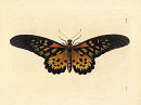 10666296