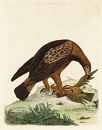 10676314