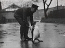 10688778