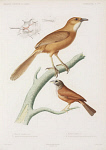 10423444
