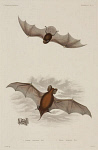10436247